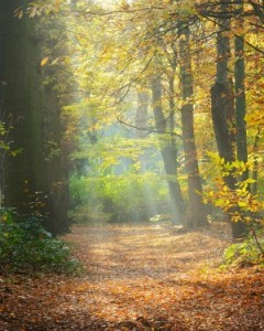 Forest path with sun shining and leaves on path
